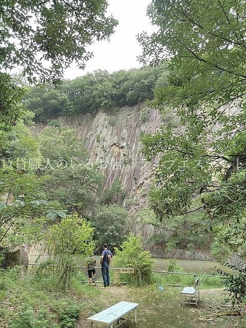 由良山の睡蓮の池