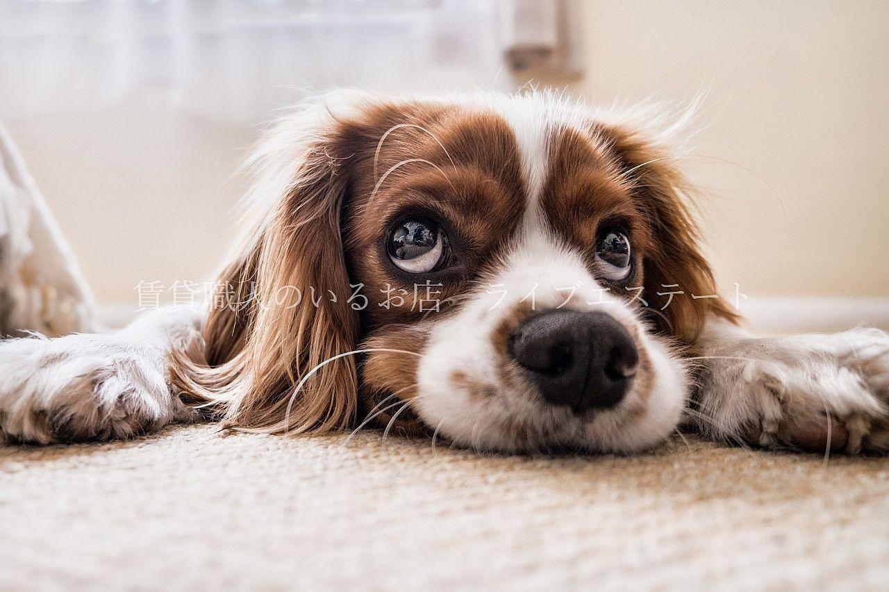 ペットを飼ってはいけない賃貸物件でペットを飼ったらどうなる?(*_*)